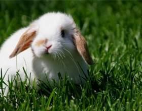 Как определить возраст декоративного кролика фото