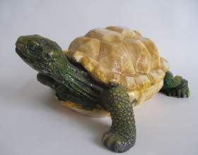Как определить пол сухопутной черепахи фото