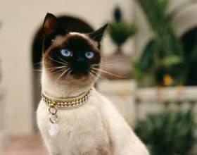 Как повысить аппетит у кошки фото