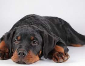 Как оставить щенка одного дома фото