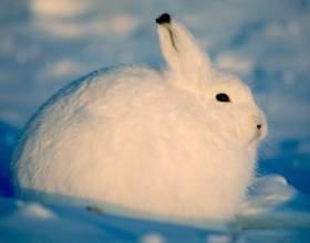 Как откормить кролика фото
