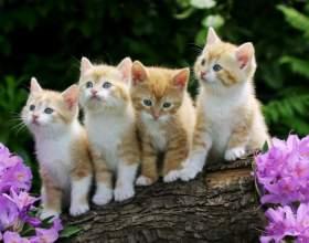 Как отличить котят фото