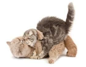 Как отличить кота от кошки фото