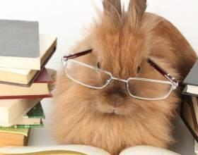 Как отличить декоративного кролика фото