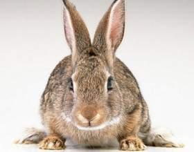 Как отличить мех кролика фото