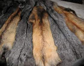 Как отличить стриженного кролика от норки фото