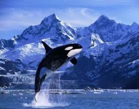 Как отмечают всемирный день китов и дельфинов в мире фото