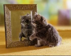 Как отобразить зеркально фото