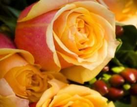Как отпоить розы фото