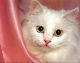 Как отучать кошку гадить по углам фото