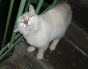Как отучить кошек гадить в подъезде фото
