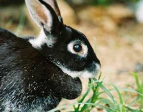 Как отучить кролика кусаться фото