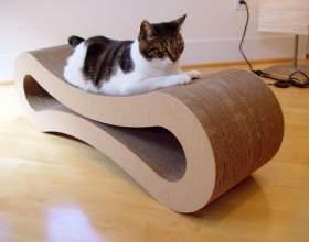 Как отучить кошку царапать мебель фото