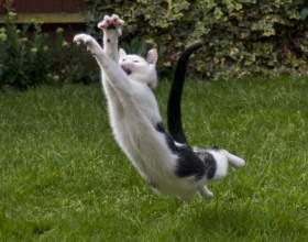 Как отучить кошку есть цветы фото
