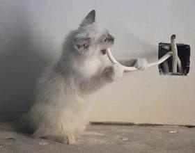 Как отучить кошку грызть провода фото