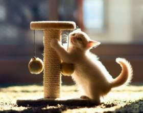 Как отучить кошку отдирать и царапать обои дома фото