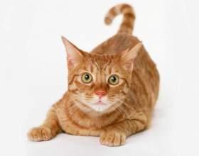 Как отучить кошку писать где попало фото