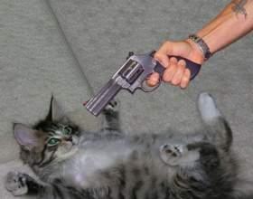 Как отучить кота гадить где попало фото