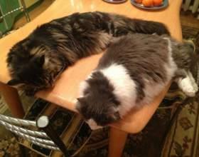 Как отучить кошку спать на кухонном столе фото