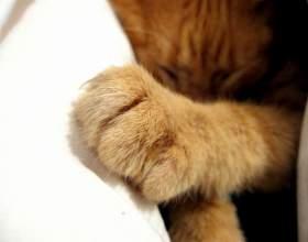 Как отучить котенка драть обои фото
