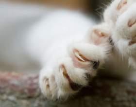 Как отучить кота драть мебель фото