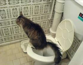 Как отучить кота метить на дверь фото