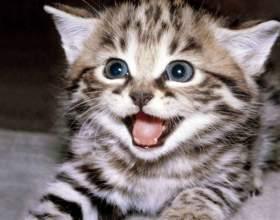 Как отучить котенка грызть провода фото
