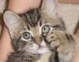 Как отучить котенка кусать руки фото