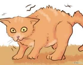 Как отучить котенка кусаться фото