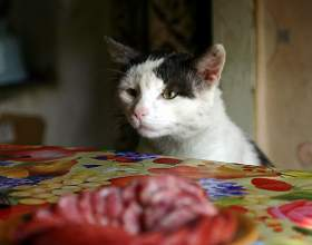 Как отучить котенка лазить на стол фото