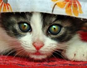 Как отучить котенка лазить по занавескам фото
