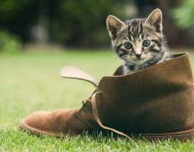 Как отучить котят грызть обувь фото