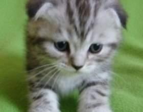 Как отучить котенка писать на кровать фото