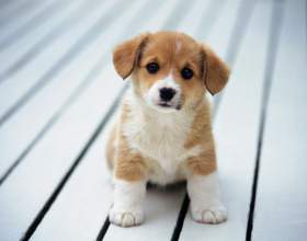 Как отучить собаку писать в квартире фото