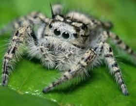 Как узнать ядовитого паука фото