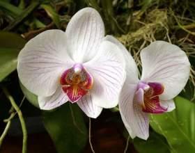 Как пересаживать орхидеи фото