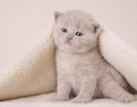 Как перевести котенка на корм фото