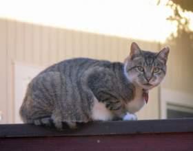 Как перевоспитать уличную кошку фото