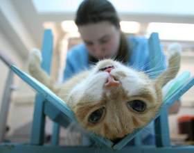 Как подготовить кошку к стерилизации фото