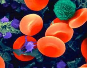 Как поднять лейкоциты крови? фото