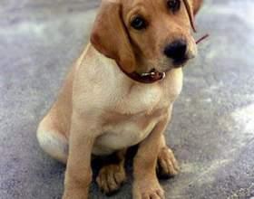 Как подобрать собаку фото