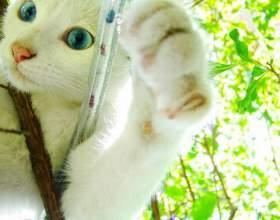 Как подрезать когти у кошки фото