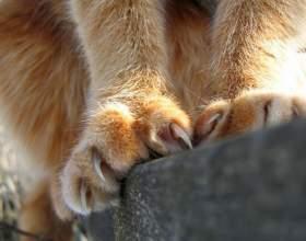 Как подстричь кошке когти фото