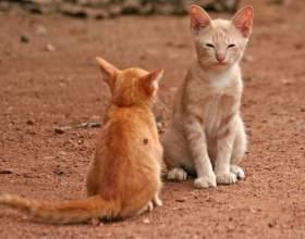 Как подружить кота и кошку фото