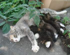Как выкормить новорожденного котенка фото