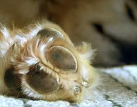 Как подстричь когти собаке фото