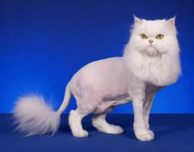 Как подстричь кота фото