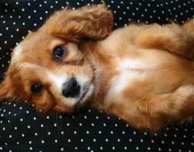 Как подстричь щенку когти фото