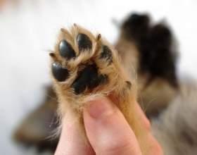 Как подстричь собаке когти фото