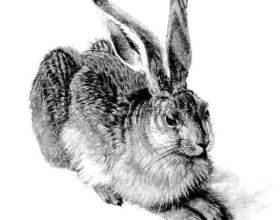Как поэтапно рисовать зайца карандашом фото